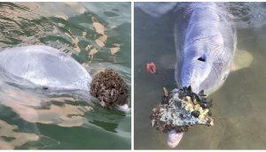 Un delfín regala a los humanos sus tesoros del fondo del océano a cambio de un poco de comida