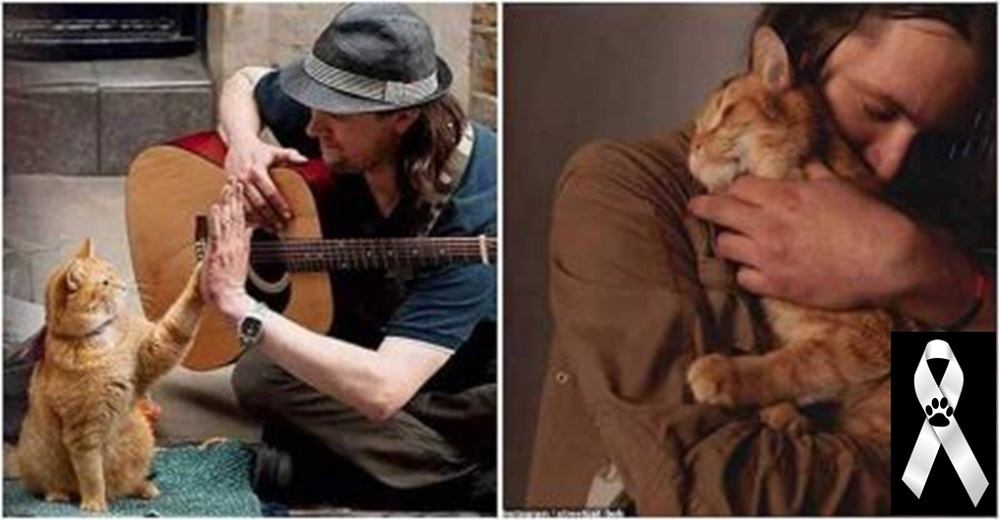 Muere a los 14 años, Bob, el famoso gatito callejero que tocó miles de corazones