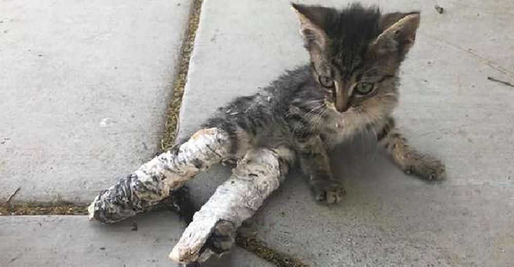 Niños encuentran una pobre gatita con las patas supuestamente rotas y hacen todo para salvarla