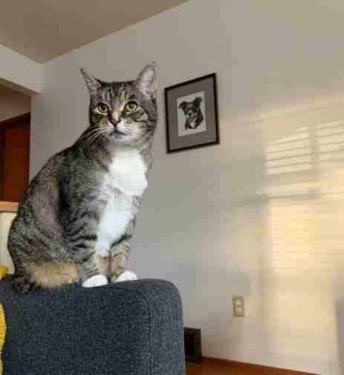 dulce animal aretes en la tele que Catwoman nuevo gatito Aretes gato gatito