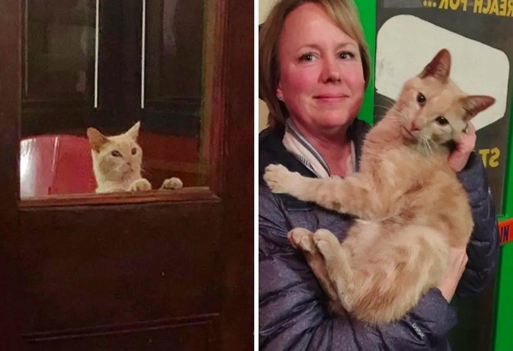 Una pareja sale a cenar y regresa a casa con el gato callejero más dulce en sus brazos