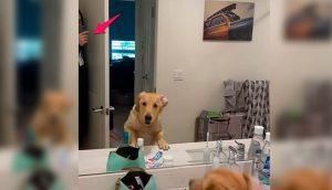 Perrito no entiende nada al encontrar a papá en el espejo mientras jugaban a las escondidas