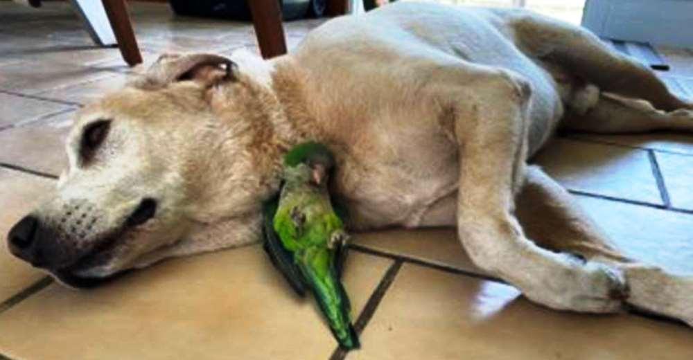 Perrito salva a un lorito que cayó de un nido y no se aparta de su lado para que sobreviva