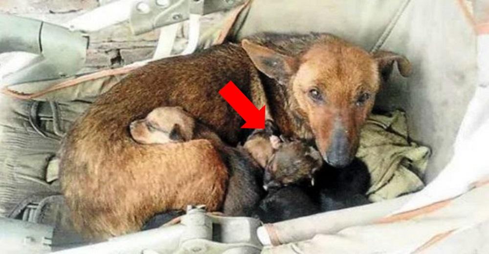 Encuentran a una perrita acurrucando a un bebé abandonado como si fuera uno más de sus cachorros