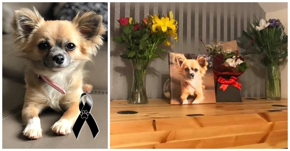 """""""La hallaron acurrucada""""–Chihuahua sacrifica su vida por su dueña al pensar que moriría atrapada"""