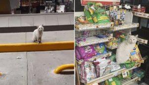 Gato callejero visita una tienda todos los días para pedirle a la gente que le compre golosinas