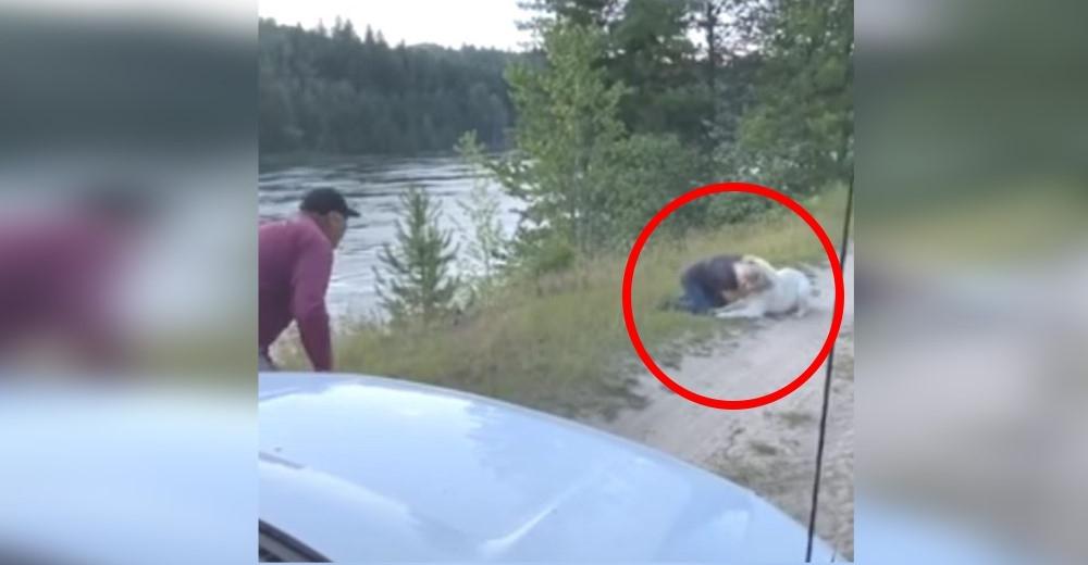 Tras días de angustia finalmente encuentran en una carretera a su perrito desaparecido