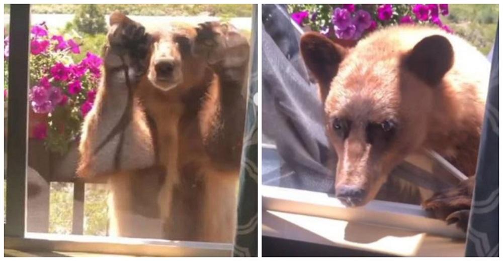 Familia se queda helada cuando un oso hambriento responde al ver que no lo dejaban entrar