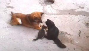 Una mamá gata presenta sus gatitos recién nacidos a un perro callejero con el que convive