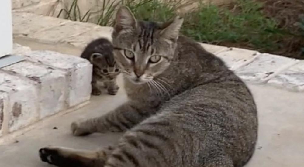 Gata callejera se hace amiga de una pareja y les trae su bebé recién nacido para que lo adopten