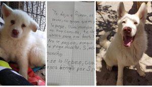 El perrito que un desolado niño dejó en un refugio para que no lo pegaran más, ya ha crecido