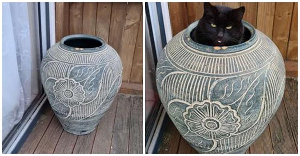 Su gata encuentra el escondite perfecto y no para de reír con su carita al ser descubierta