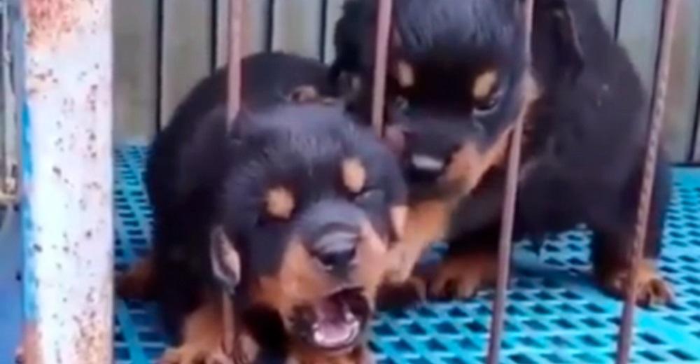 Cachorrito llora desesperado tras atorar su cabecita, pero su hermano estaba ahí para ayudarlo