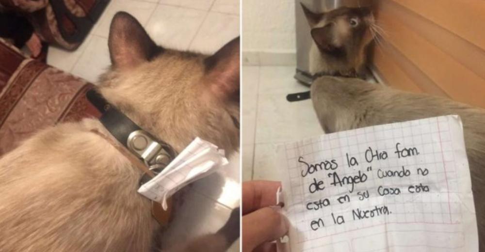 Gato regresa a casa con una nota en su collar que comprueba su doble vida