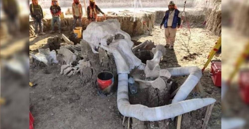 """Muestran la """"central de mamuts"""" más grande del mundo descubierta por un grupo de arqueólogos"""