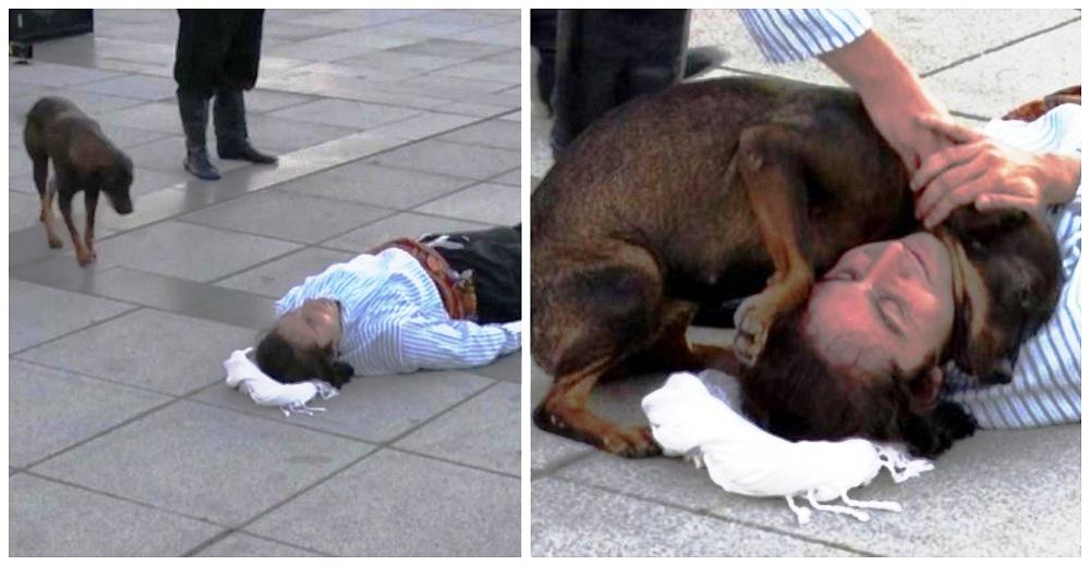 Perro callejero corre a interrumpir una actuación para ayudar al actor que fingía estar herido
