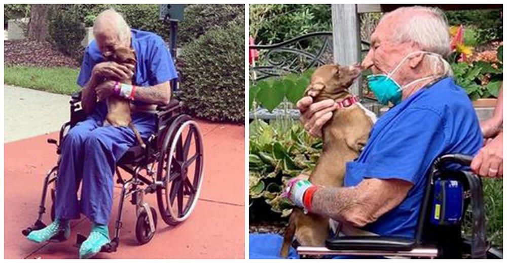 Diminuta chihuahua se reúne con su dueño anciano tras correr para salvarle la vida