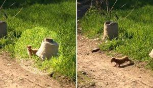 Cachorrito diminuto escondido detrás de un arbusto buscaba ayuda desesperada para sus hermanitos