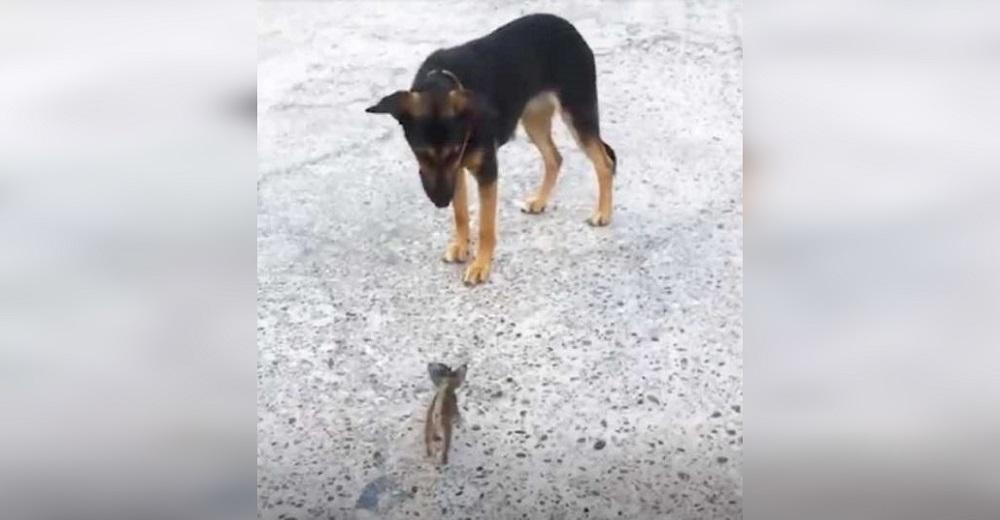 Diminuto gatito callejero se acerca a la perrita de una familia para mendigarle su amor