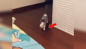 Madre gata primeriza entra a la habitación de su dueña para presentarle a su cría recién nacida