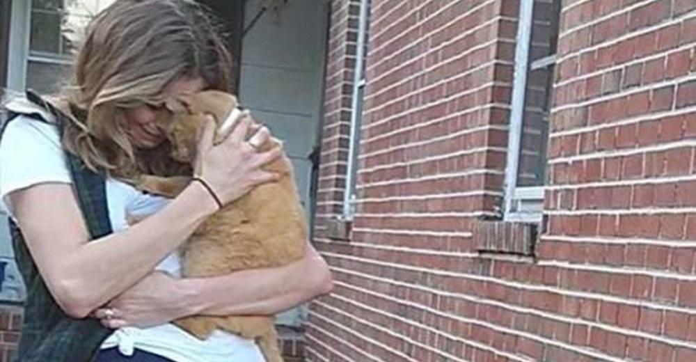 Gatito perdido salta a los brazos de su mamá después que ella lo lloró durante 536 días