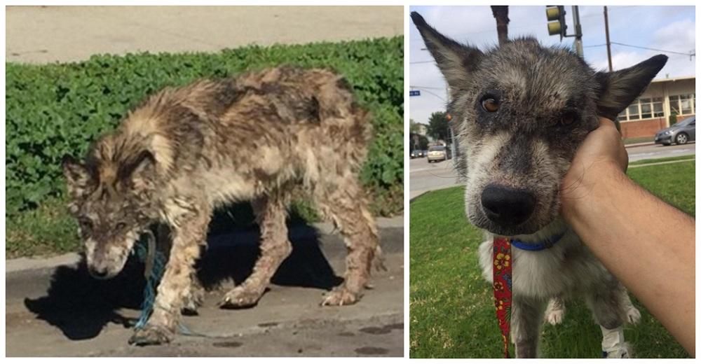 Luchan por acercarse a la criatura enferma que necesitaba ayuda urgente sin saber qué animal era