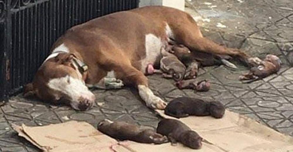Rescatan a la perrita que dio a luz en la acera y protegió a sus crías con amor hasta colapsar
