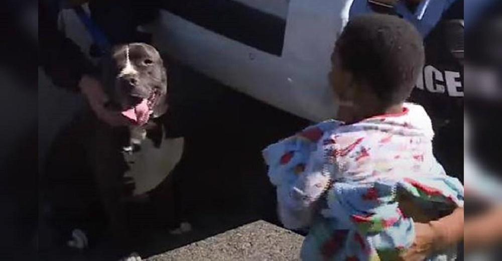 Un pitbull callejero reacciona al ver a un niño desaparecido que nadie reclamaba