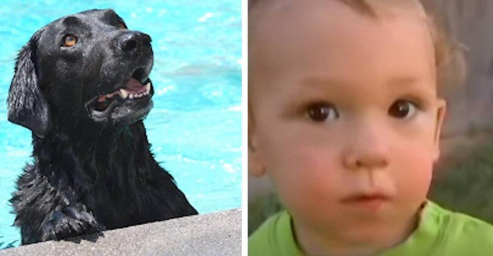 Un bebé desaparece del patio donde jugaba, su perro corre a la piscina y le salva la vida
