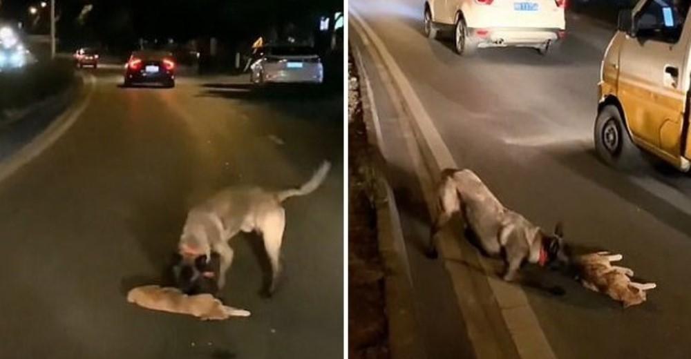 Graban al perrito que intentó resucitar a un gato que encontró en media calle