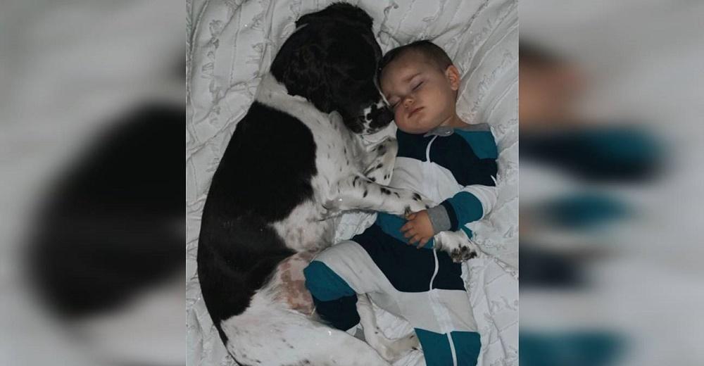 Graban a un perro de gran tamaño dormido junto a un pequeño niño, luego se despierta