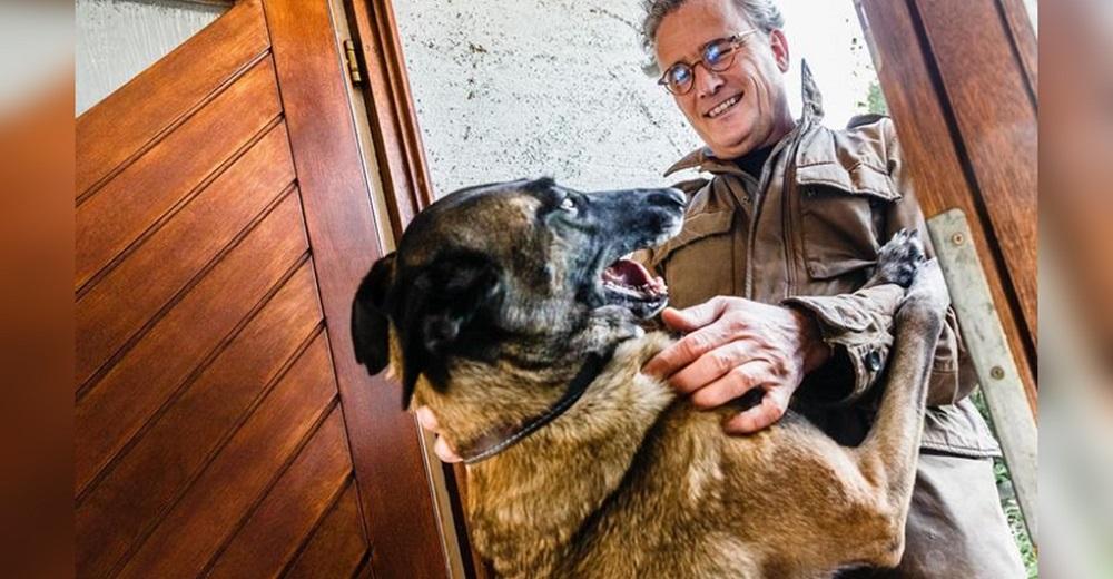Seguramente tu perro te saluda y salta cada vez que llegas a casa… ¿Sabes por qué lo hace?