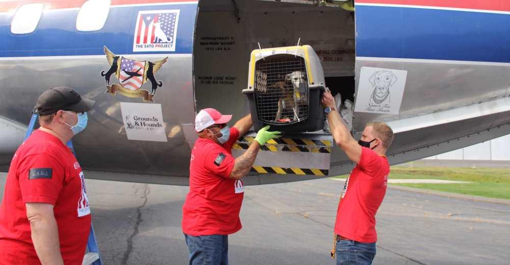 Abren la puerta del avión tras un largo viaje y 130 gatos y perros corren con sus nuevos padres