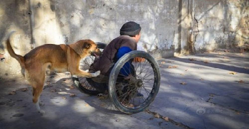 """Captan a un perrito que desde hace muchos años empuja la """"silla de ruedas"""" de su dueño"""