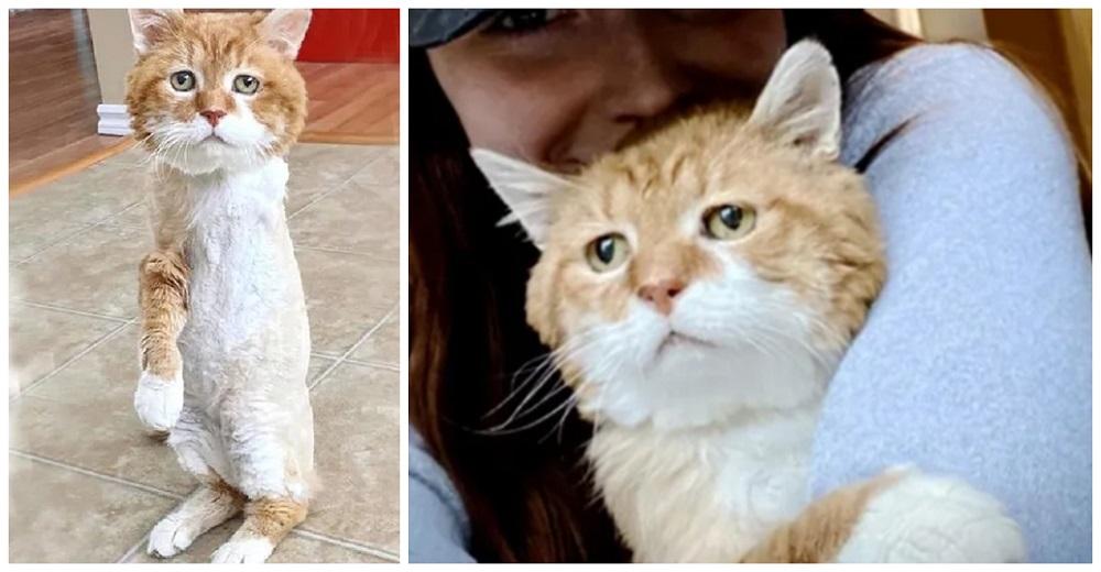 Gato de tres patas vuelve por fin al hogar donde conoció la bondad de una familia