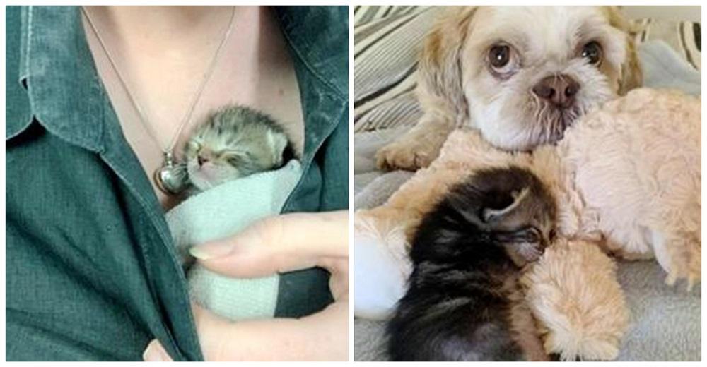 Gatita de 3 patas se aferró a la vida, ahora tiene un perrito amoroso para ayudarla a prosperar