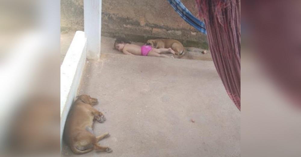 """Se alarma al encontrar a los perros y a su bebé """"inmóviles"""" en el suelo"""