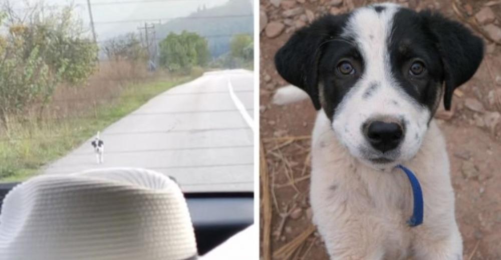 Perrito de la calle corre detrás de un auto exigiendo que lo rescaten