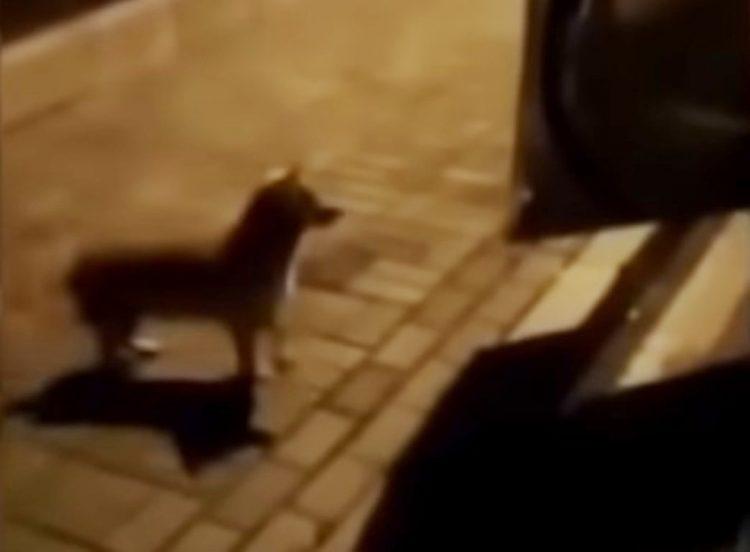 Perrito de la calle derrama lágrimas cuando una mujer se acerca con una muestra de cariño - Zoorprendente