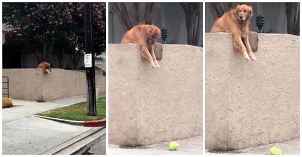 Un perrito deja caer la pelota sobre la pared cada día esperanzado en que alguien juegue con él