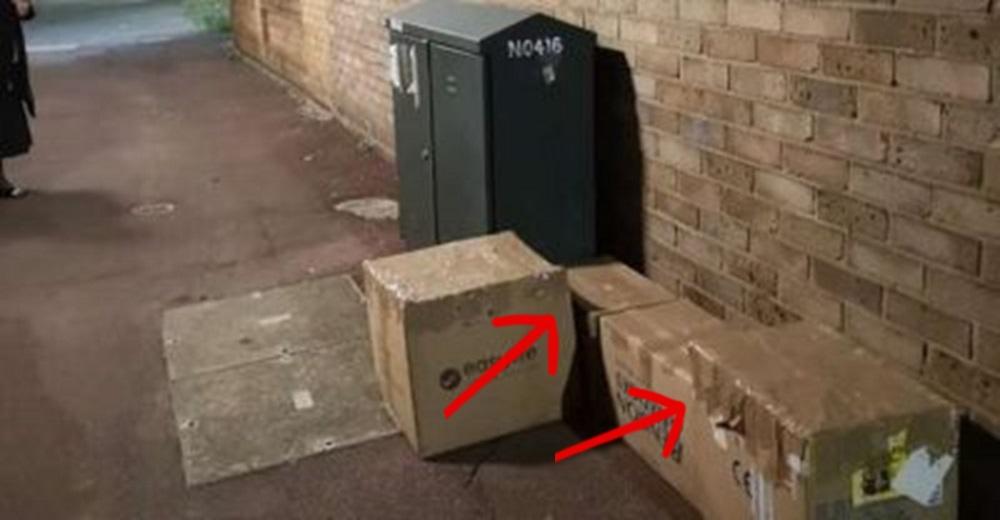 Unas cajas selladas llaman su atención y escucha unos débiles maullidos en su interior
