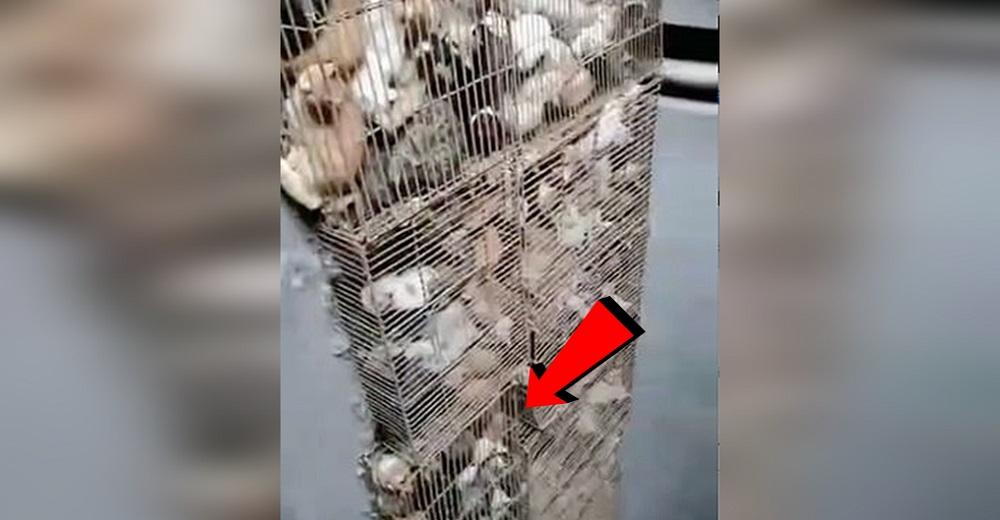 Sucios, hambrientos y desesperados, gatos hacinados en jaulas estaban listos para ser comida