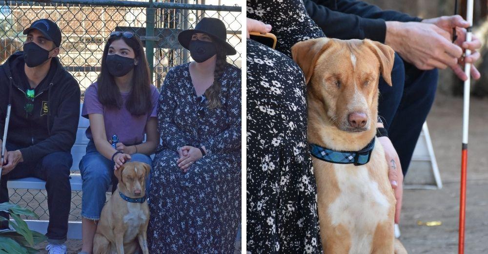 El mundo entero se une en un día para ayudar al perrito al que sus dueños removieron sus ojitos