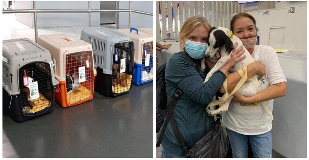 30 perros sin hogar se suben a un avión sin saber que el destino serán los brazos de papá y mamá