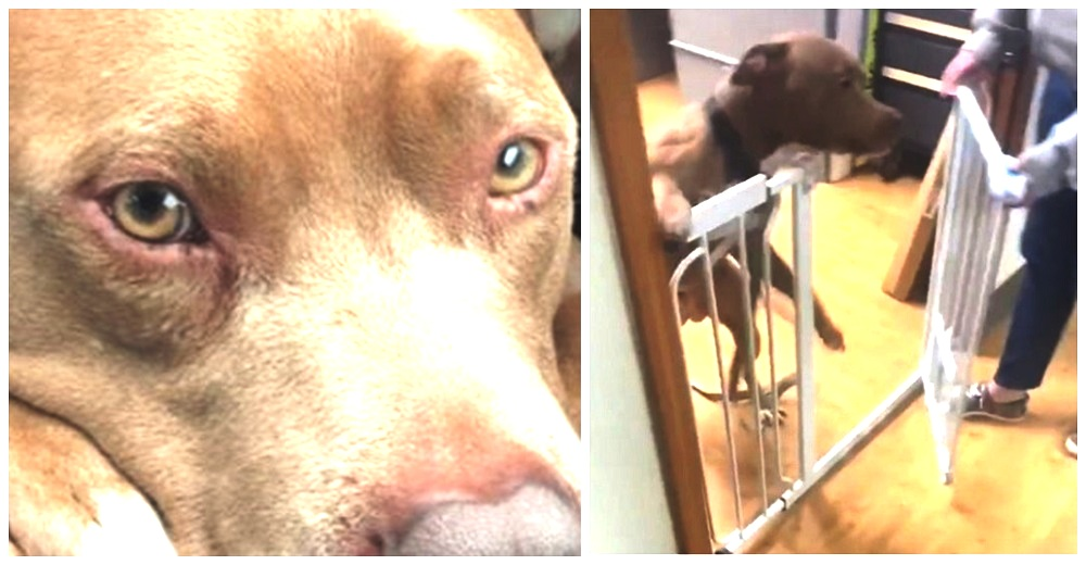 Perrito no sabe que su dueña está a punto de entrar tras viajar 1.000 km para recuperarlo