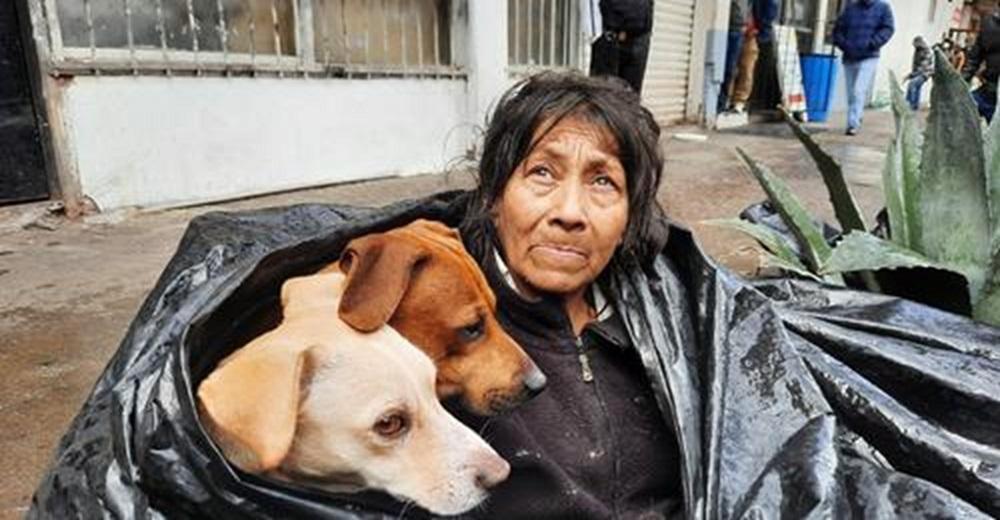 Afligida y desconsolada, se niega a ir a un refugio porque nadie la quiere con sus 6 perros
