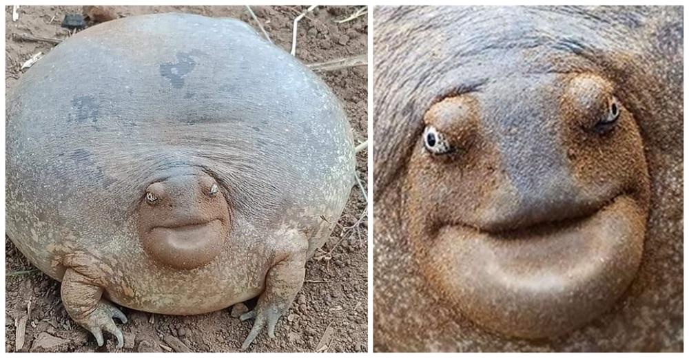A muchos les cuesta creer que el raro animal viral de cara épica sea real
