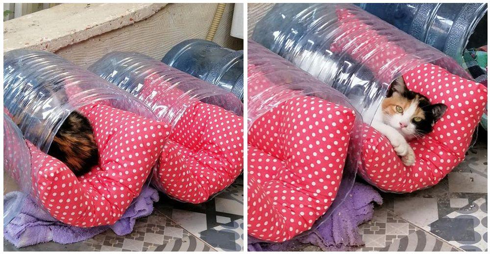 Mujer coloca decenas de camitas improvisadas por la calle y gatitos corren a acurrucarse