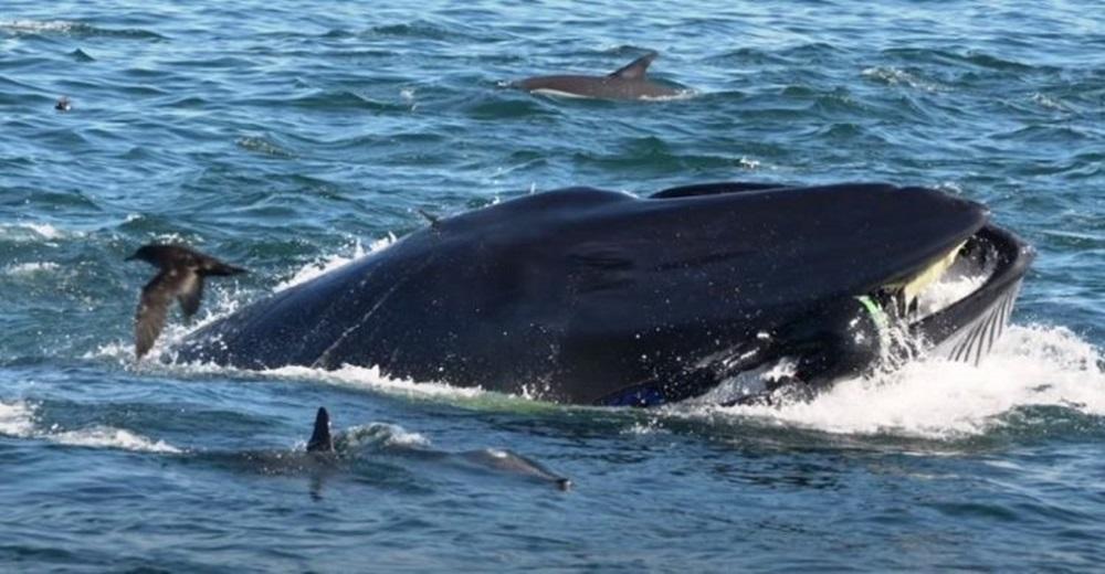 Una enorme ballena se traga un buzo y después lo escupe vivo
