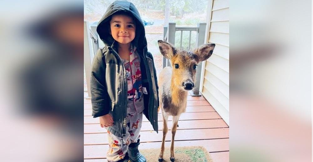 Un niño de 4 años sale a pasear y aparece en su casa con un nuevo amigo